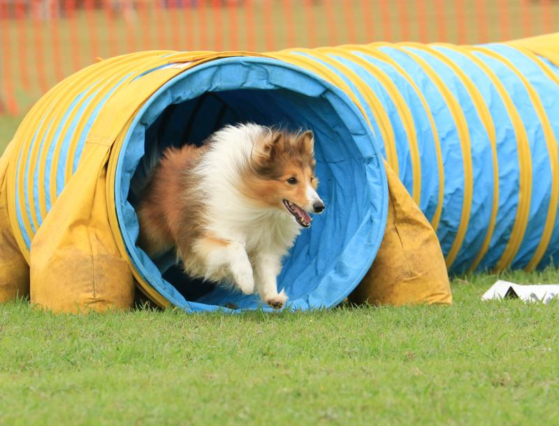 agility-tunnel
