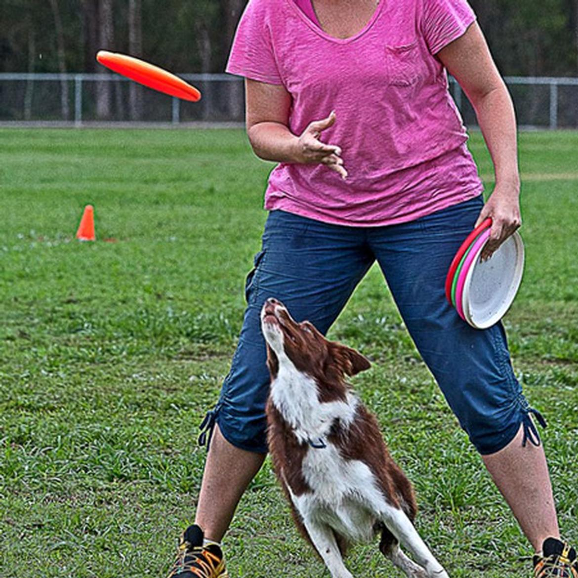Canine Disc Classes