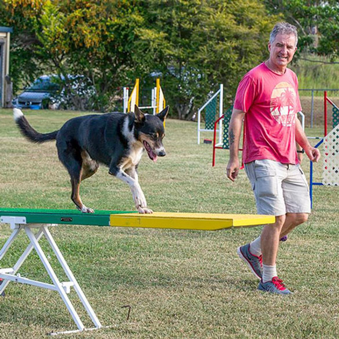 Beginner's Agility Classes