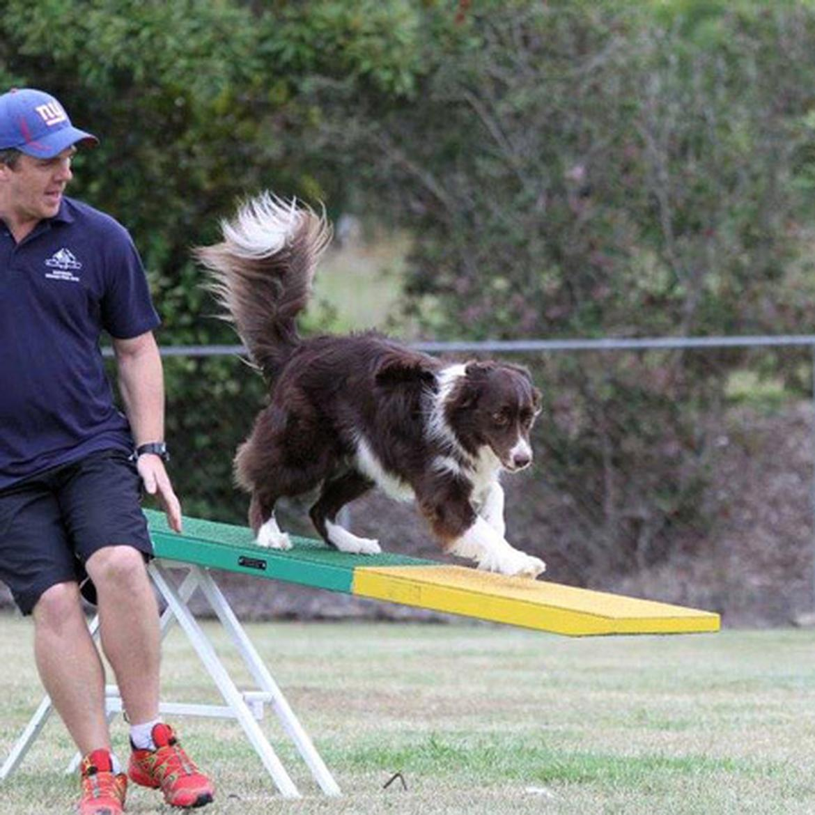Intermediate Agility Classes